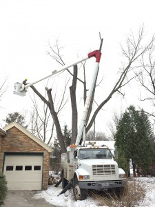 Year round tree removal from Aerial Tree Service - Eau Claire, Chippewa Falls and Menomonie