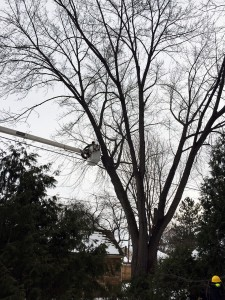 Tree Trimming by Aerial Tree Service - Eau Claire, Chippewa Falls and Menomonie