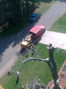 Tree removal from Aerial Tree Service - Eau Claire, Chippewa Falls and Menomonie