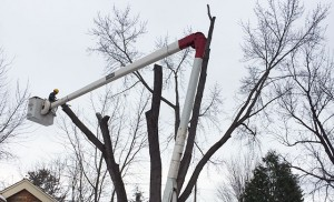 Cutting down a dead tree with Aerial Tree Service - Eau Claire, Chippewa Falls and Menomonie