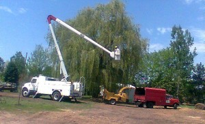 Trimming trees by Aerial Tree Service - Eau Claire, Chippewa Falls and Menomonie